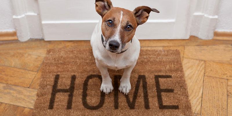 Hunter Valley Pet Friendly Accommodation