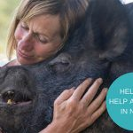 Where Pigs Fly farm sanctuary Expansion Project