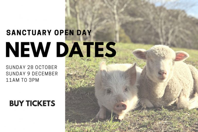 Where Pigs Fly open day, Farm Sanctuary, Hunter Valley