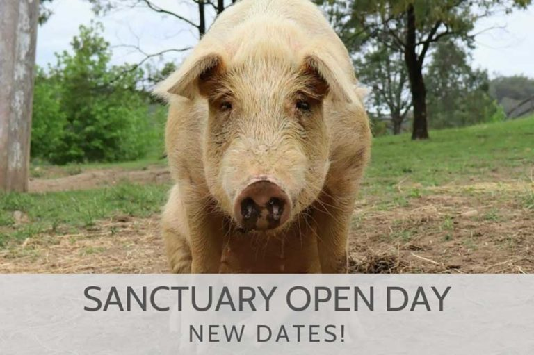 Where Pigs Fly Farm Sanctuary Open Day