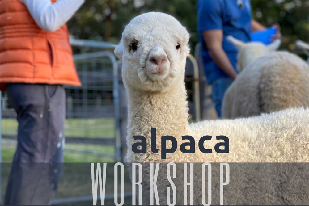 Alpaca Workshop and Training by Little Valley Farm