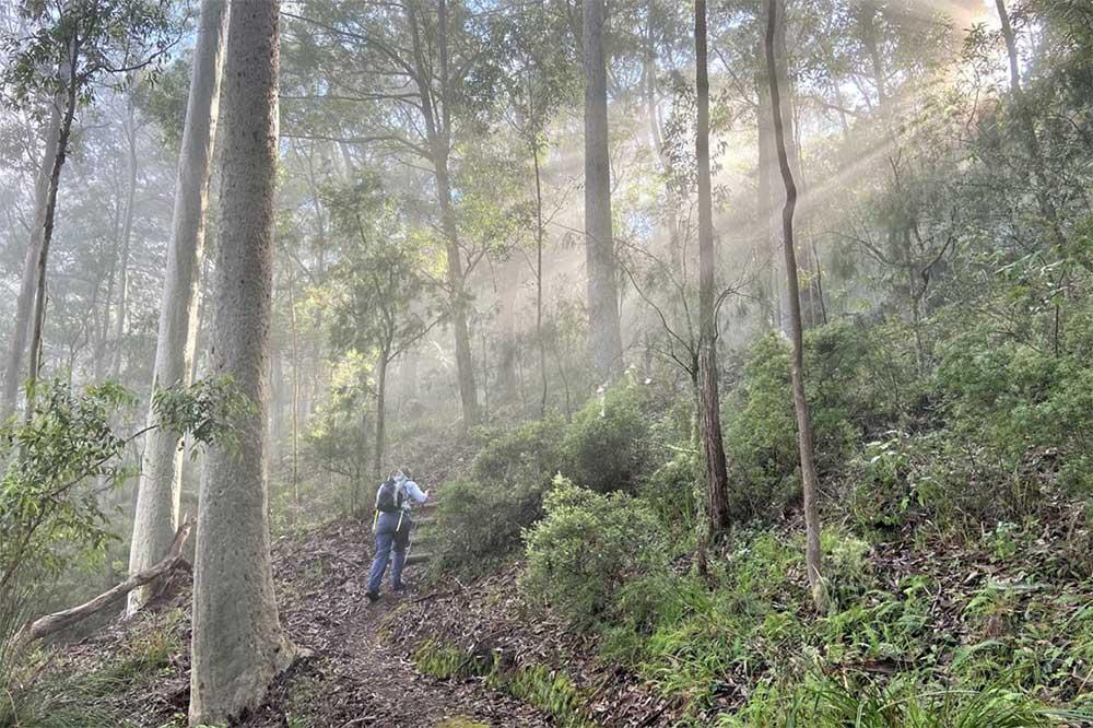 Hunter Valley Walking Gourmet Escape